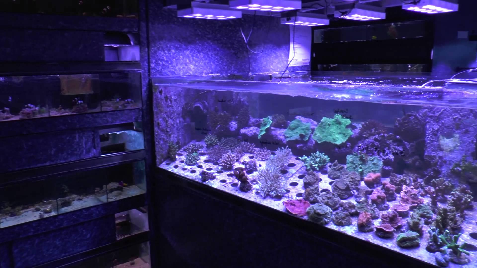 aquarium poisson d or