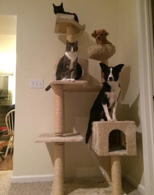 arbre a chat pour deux chats