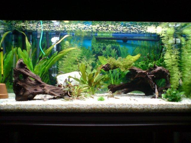 aquarium d eau chaude