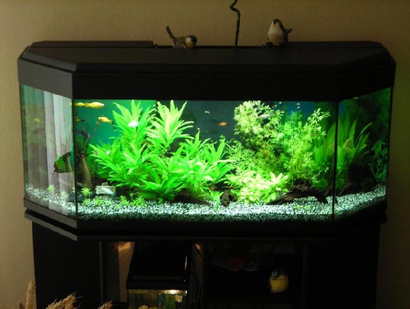 aquarium facile
