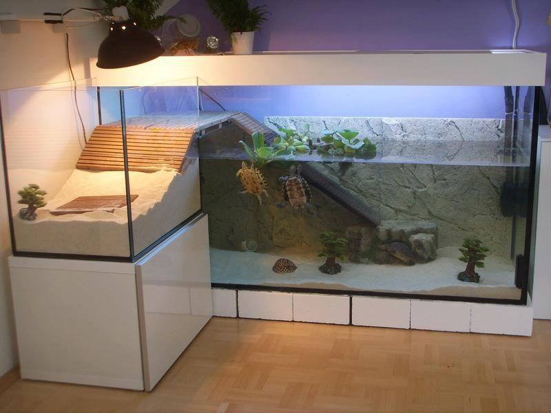 aquarium pour tortue