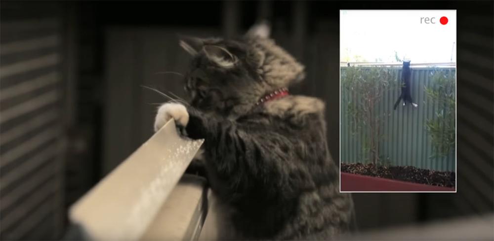 dispositif anti chat