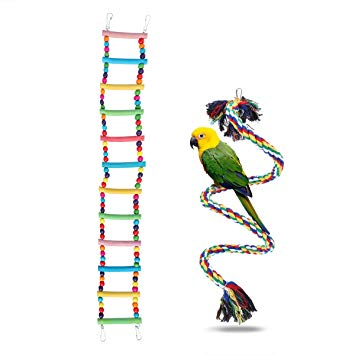 echelle perroquet