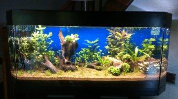 eclairage immergeable pour aquarium